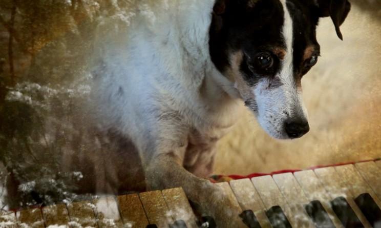 """La rat terrier Lollabelle en """"Heart of a Dog"""" de Laurie Anderson."""