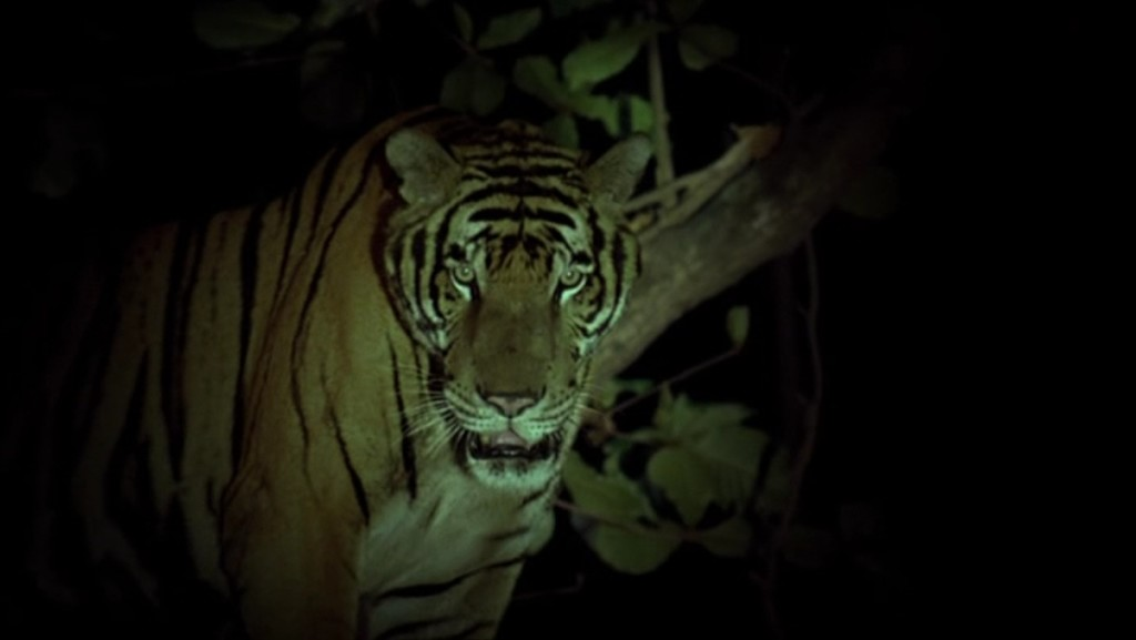 tropical_malady_tigre