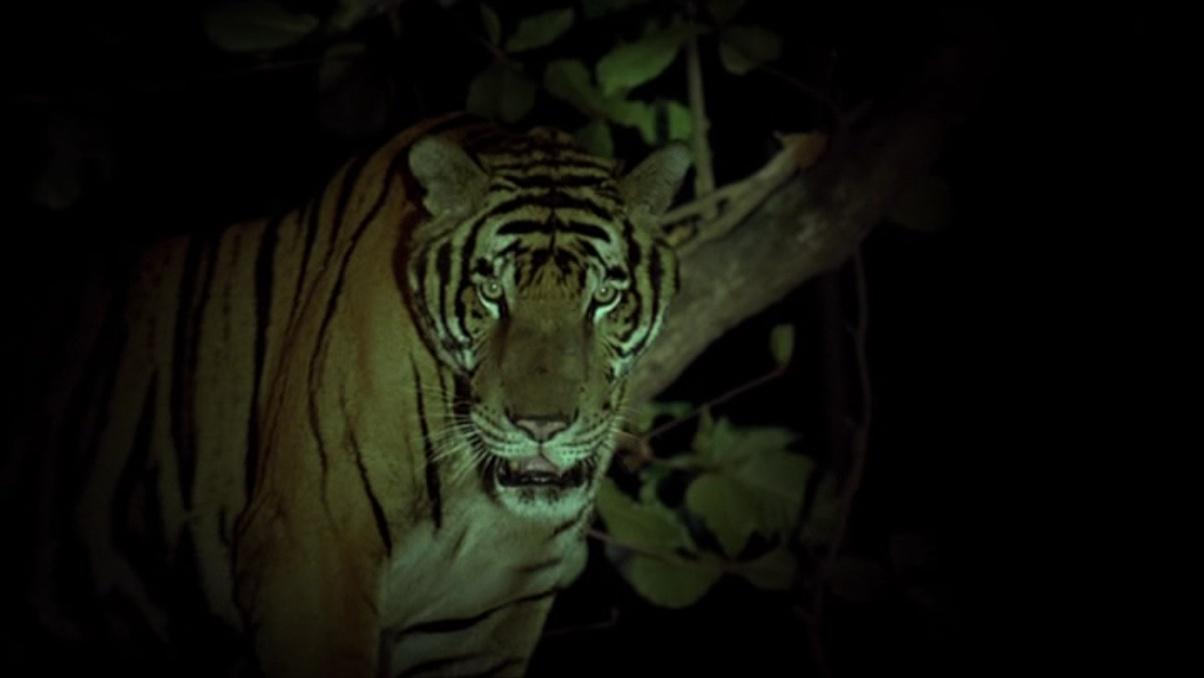 http://otroscineseuropa.com/wp-content/uploads/2016/04/tropical_malady_tigre.jpg